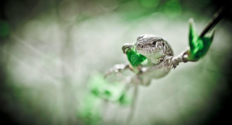 Reptil-Thema lizenzfreie stockfotos