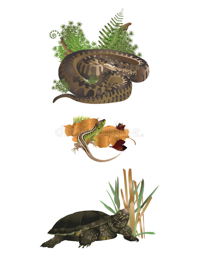 Reptilar stock illustrationer