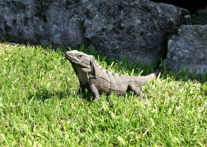 reptile obraz stock