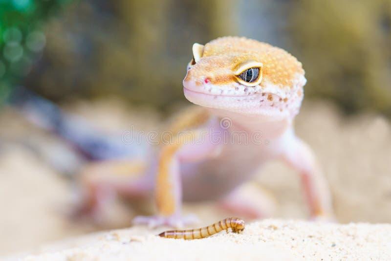 Reptile and caterpillar stock photos