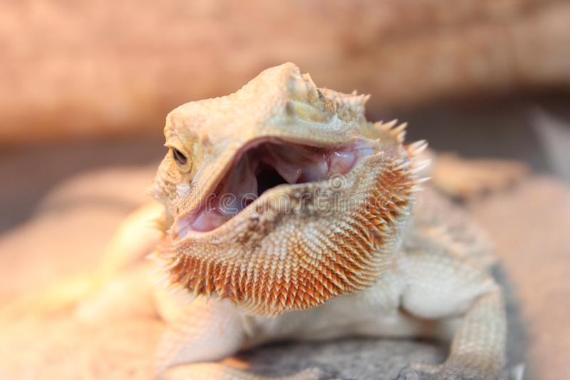 Reptile, Fauna, Scaled Reptile, Close Up stock images