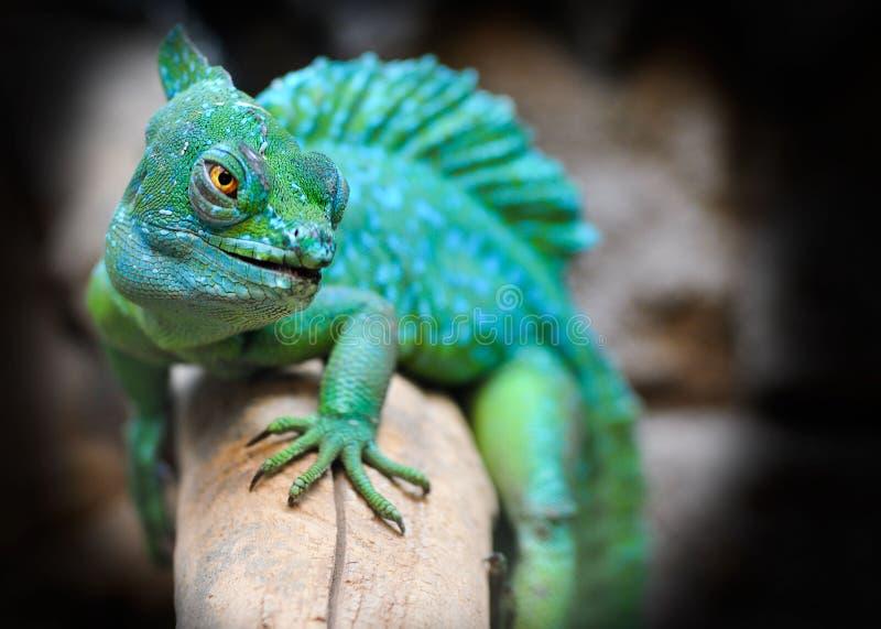 Reptile, Green, Lizard, Scaled Reptile stock image