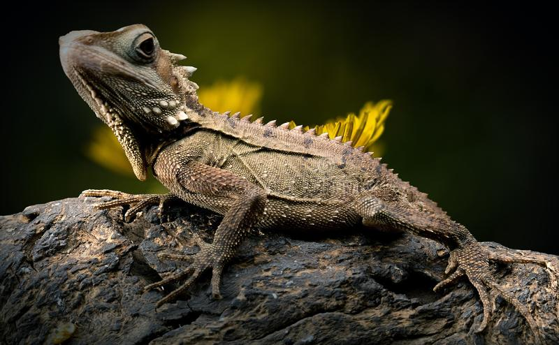 Reptile, Lizard, Scaled Reptile, Fauna royalty free stock image