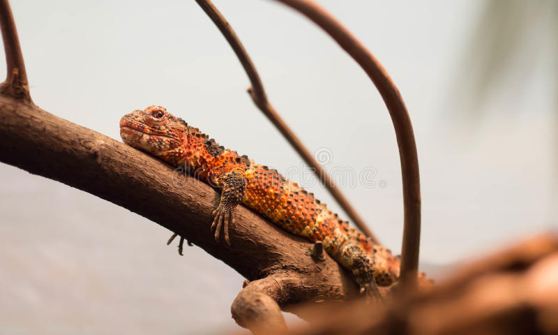 Reptile at Rotterdam Zoo. In Netherlands royalty free stock photos