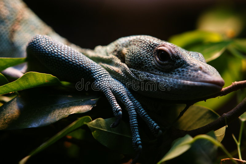 Download Reptile In San Diego Zoo Stock Photos - Image: 8445733