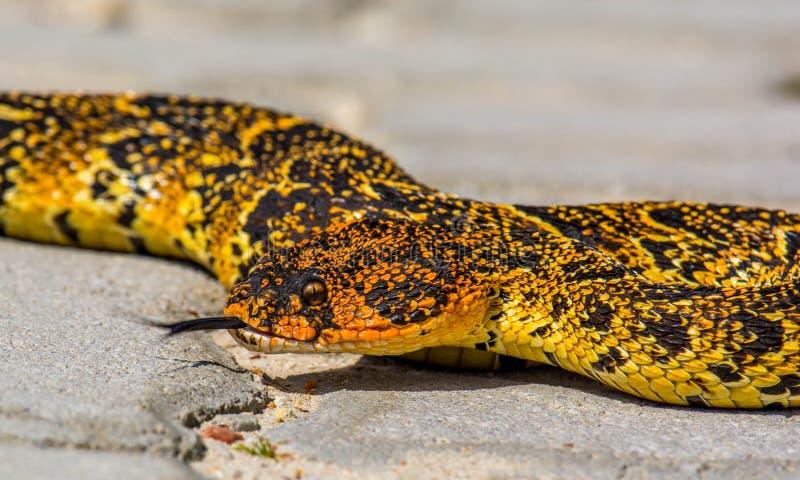 Reptile, Scaled Reptile, Terrestrial Animal, Snake Free Public Domain Cc0 Image