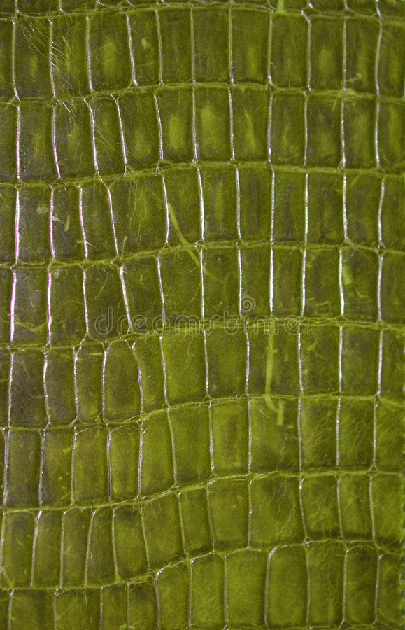 Download Reptile Texture stock image. Image of hide, green, alligator - 305011