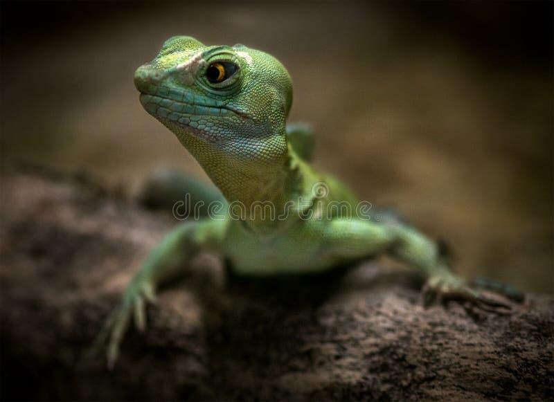 Reptile vert lézard de la nature images stock