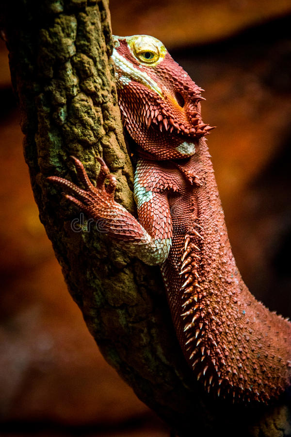 Download Reptile stock photo. Image of hand, reptile, spikes, armour - 46215048