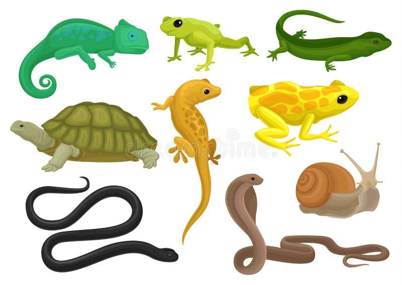 Reptilen och amfibien ställde in, kameleonten, grodan, sköldpaddan, ödlan, geckon, triton vektorillustration på en vit bakgrund stock illustrationer