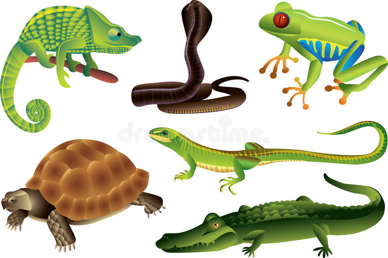 reptiles and amphibians set vector illustration