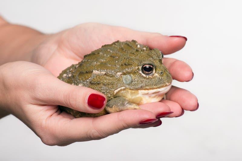 Reptiles en el fondo blanco imagen de archivo libre de regalías