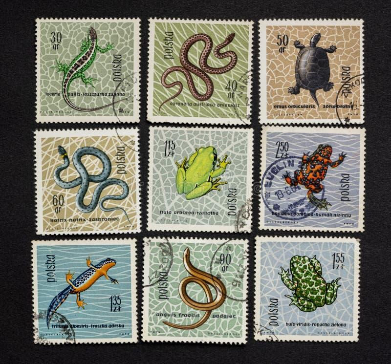 Reptiles y anfibios en sellos del poste imágenes de archivo libres de regalías