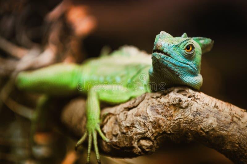 Reptilian groen stock fotografie