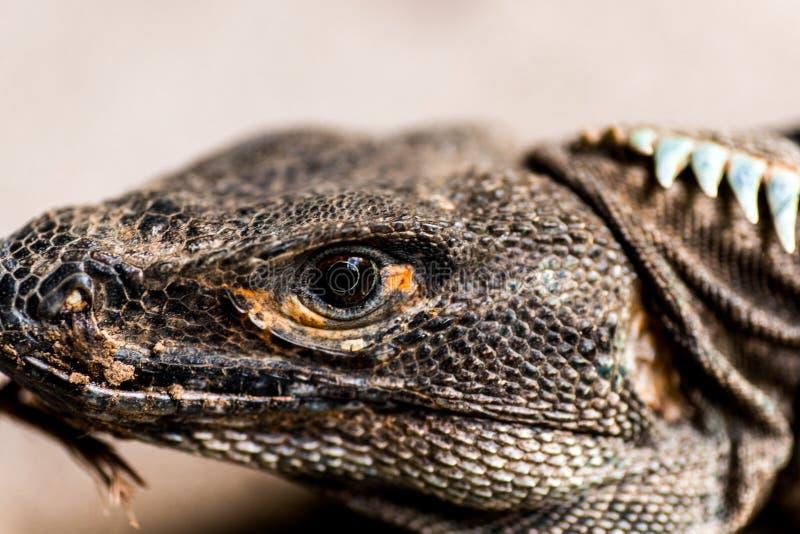 Reptilian hoofd royalty-vrije stock foto
