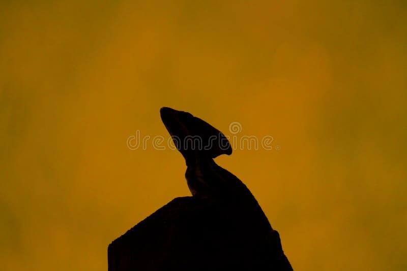 Reptilian silhouet royalty-vrije stock foto's