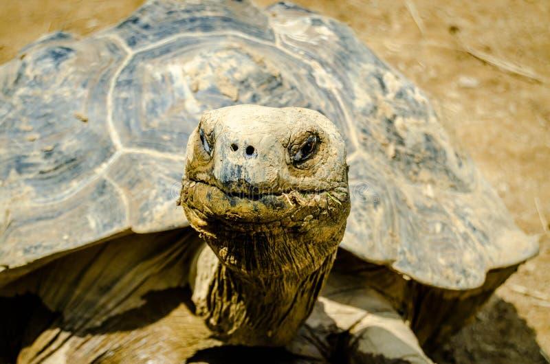 Reptilian Trots stock foto's