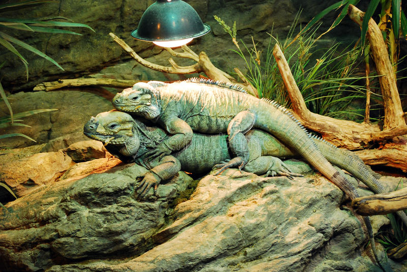 Reptilien in einem Terrarium lizenzfreies stockfoto