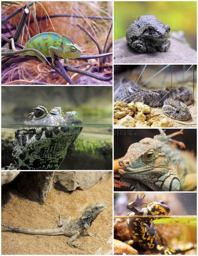 Reptilien und Amphibien lizenzfreies stockfoto