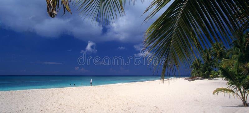 Repubblica dominicana della spiaggia dell'isola di Saona fotografia stock
