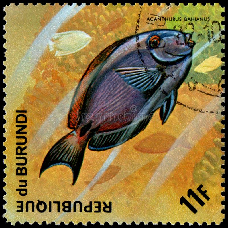 Acanthurus Bahianus Stock Image. Image Of White, Yellow