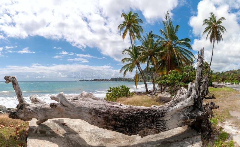 Republika Roxborough pla?a - Tropikalna pla?a Atlantycki ocean Trinidad, Tobago i Tobago wyspa - obrazy royalty free