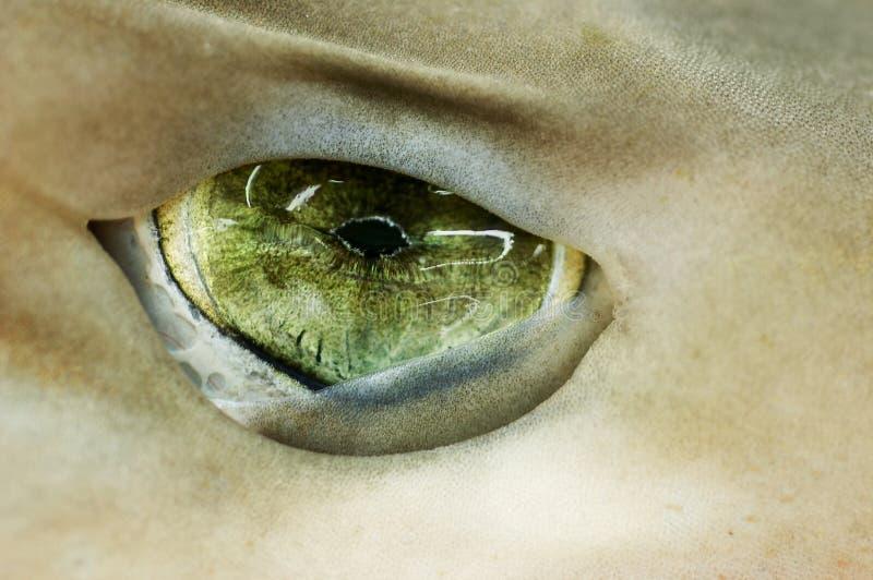 Requin d'oeil vert image libre de droits