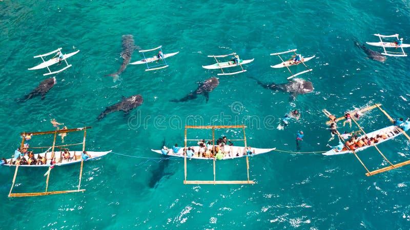 Requin de baleine d'Oslob observant à Philippines, île de Cebu Les gens naviguant au schnorchel et et observer des requins de bal images stock