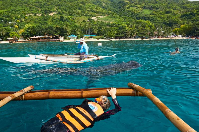 Requin de baleine observant dans Oslob, Philippines photos stock