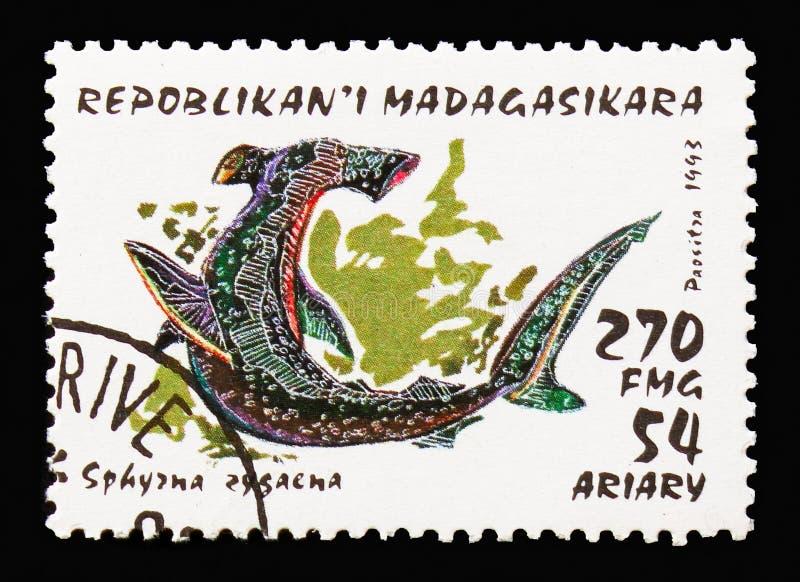 Requin de poisson-marteau lisse (zygaena de Sphyrna), serie de requins, vers 1993 images libres de droits