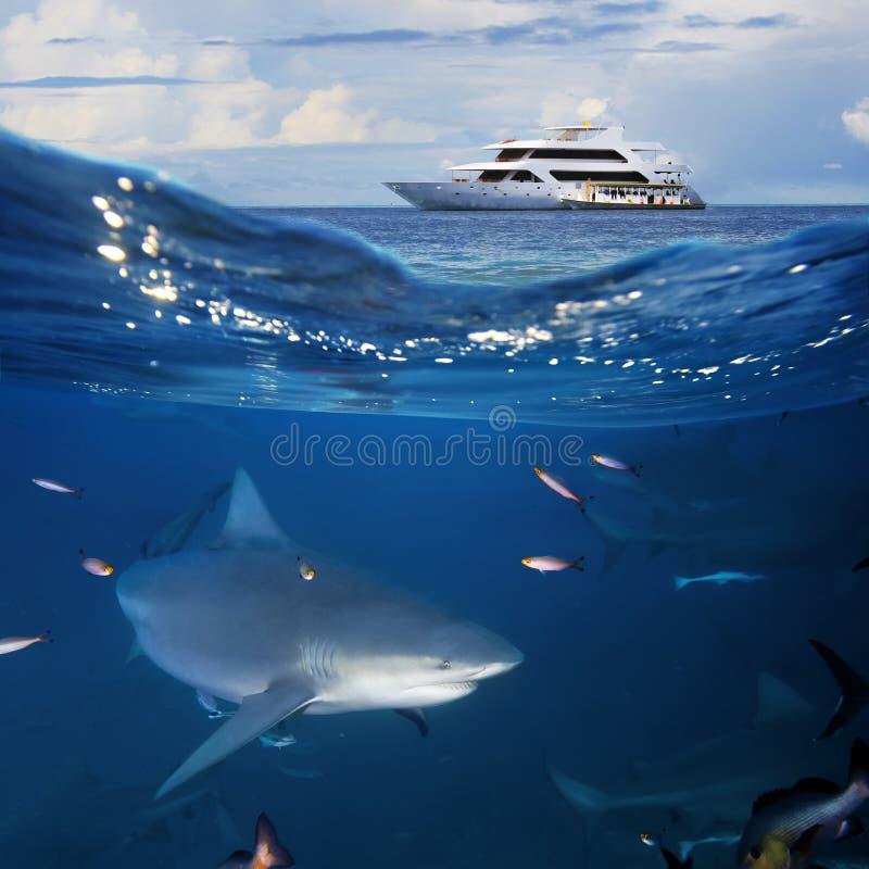 Requin de yacht et de taureau d'Oceanview images libres de droits