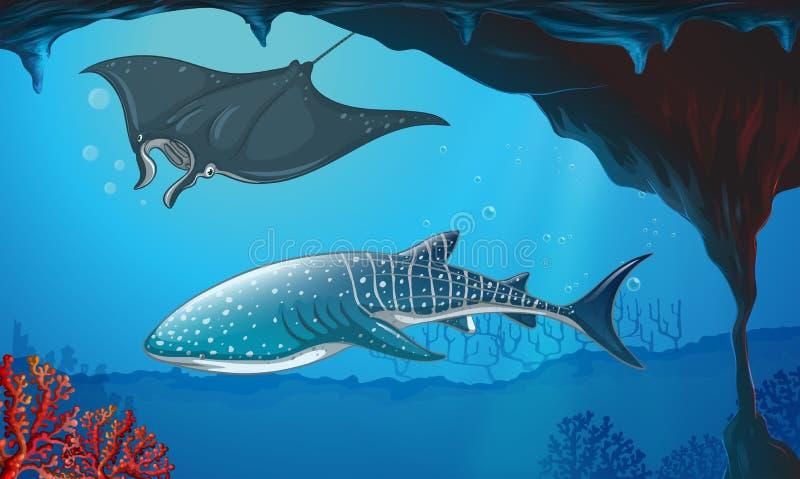 Requin et pastenague nageant sous l'eau illustration libre de droits