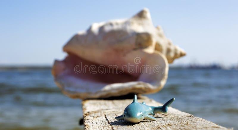 Requin sur le pilier photos libres de droits