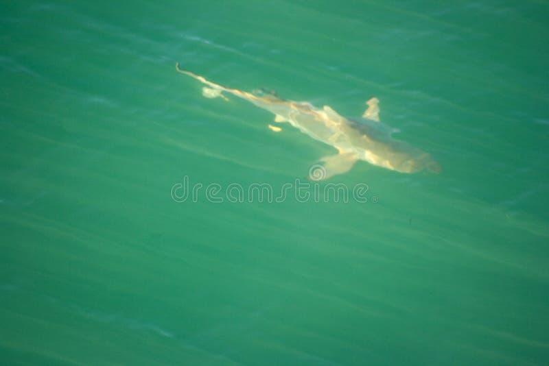 Requin vu de la passerelle photo stock