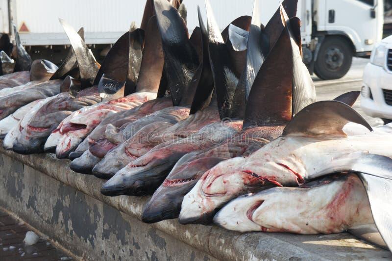 Requins photographie stock libre de droits