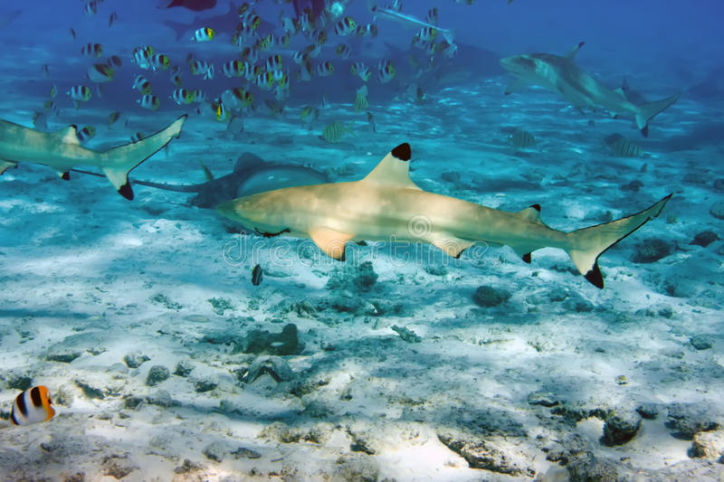 requins images stock