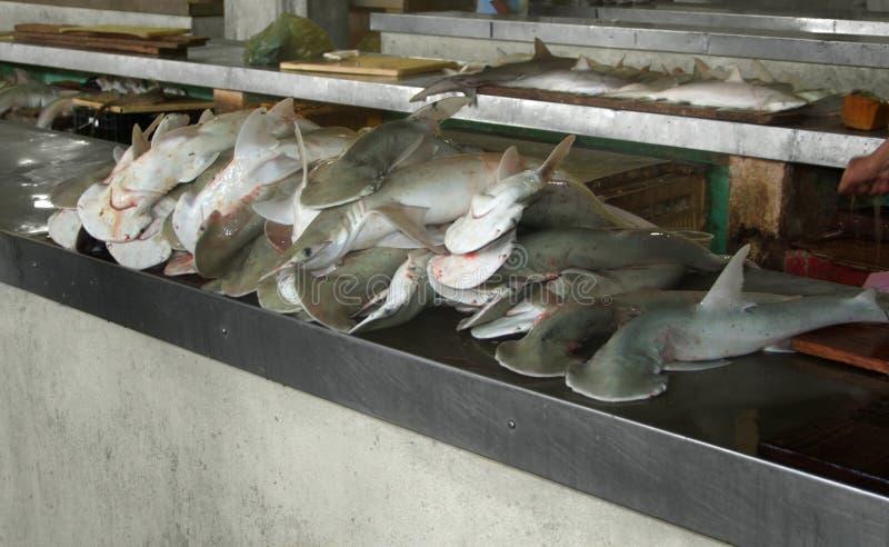 Requins de poisson-marteau image libre de droits