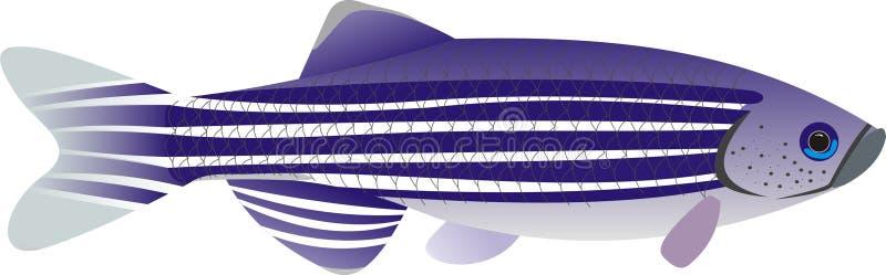 Rerio van Zebrafishdanio royalty-vrije illustratie