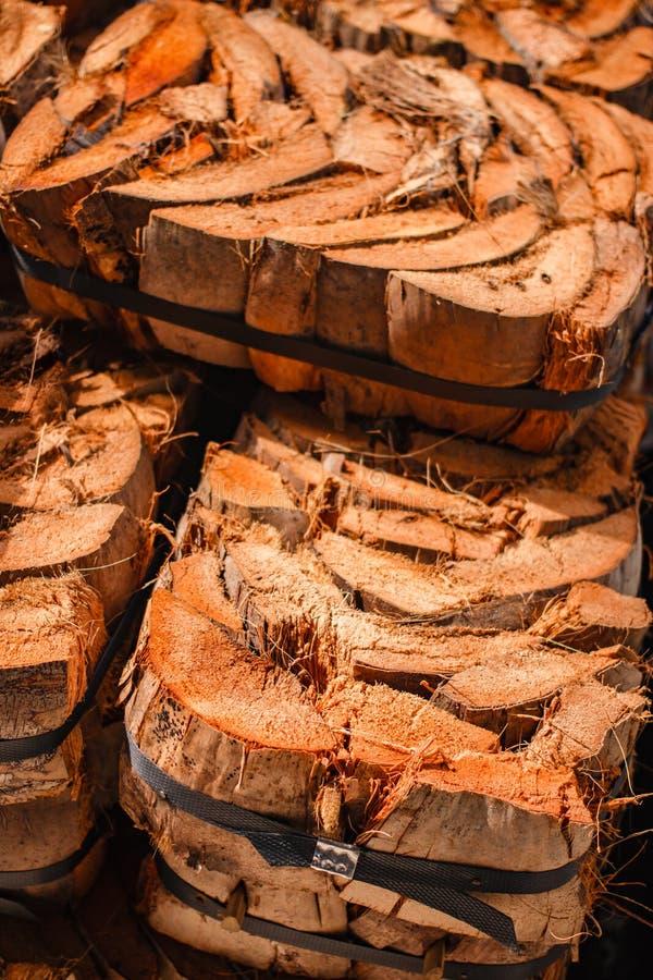 Resíduo do coco para a planta uma árvore imagem de stock