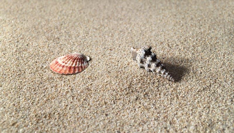 Download Res Plaży Morza Piaszczystych Cześć łupiny Zdjęcie Stock - Obraz złożonej z leisure, chroniony: 129422