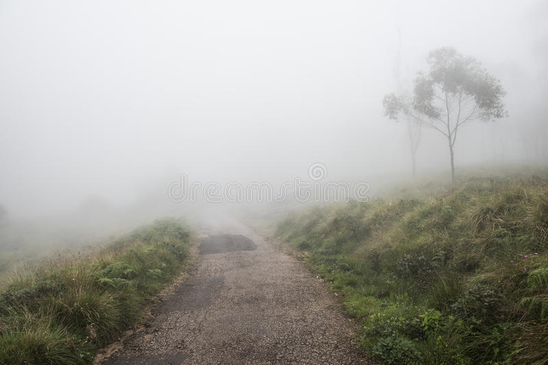 Resa på en dimmig dag royaltyfri fotografi