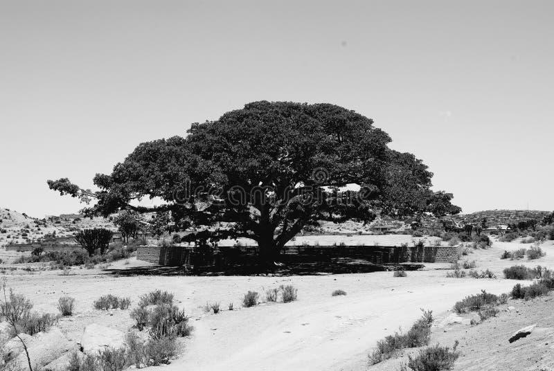Resa runt om vilagesna n?ra Asmara och Massawa royaltyfri bild