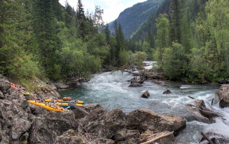 Resa till och med den lösa naturen av Altaien Barrskogar och dalen av bergfloden Bashkaus SOMMAREN landskap arkivfoto