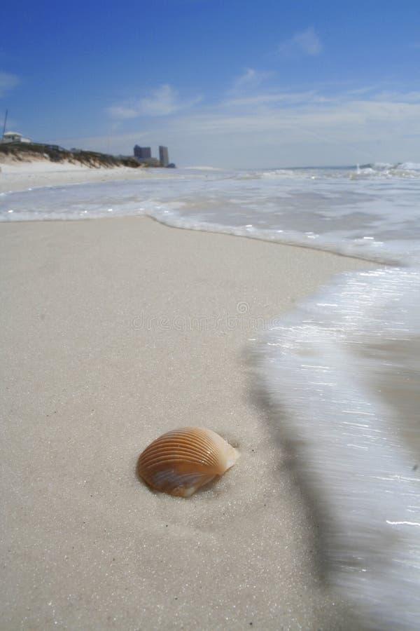 Resaca del shell fotografía de archivo