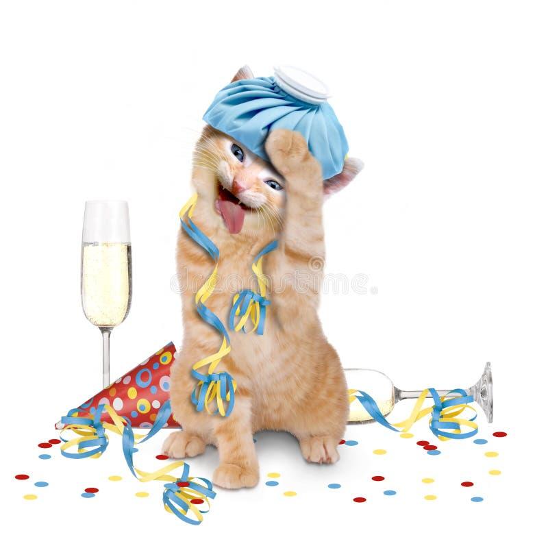 Resaca, gato con la bolsa de hielo en su cabeza imágenes de archivo libres de regalías