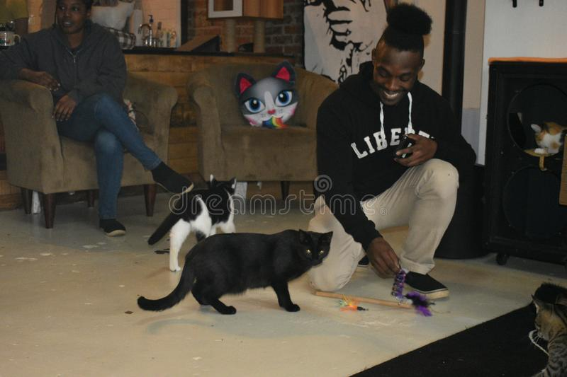 Rescue Cats Interact with Customer - Mewsic Kitty Cafe. The Music City themed Mewsic Kitty Cafe in Nashville, Tennessee, is part of a new,fast growing trend of royalty free stock photo