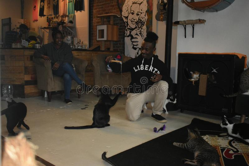 Rescue Cats Interact with Customer - Mewsic Kitty Cafe. The Music City themed Mewsic Kitty Cafe in Nashville, Tennessee, is part of a new,fast growing trend of stock photos