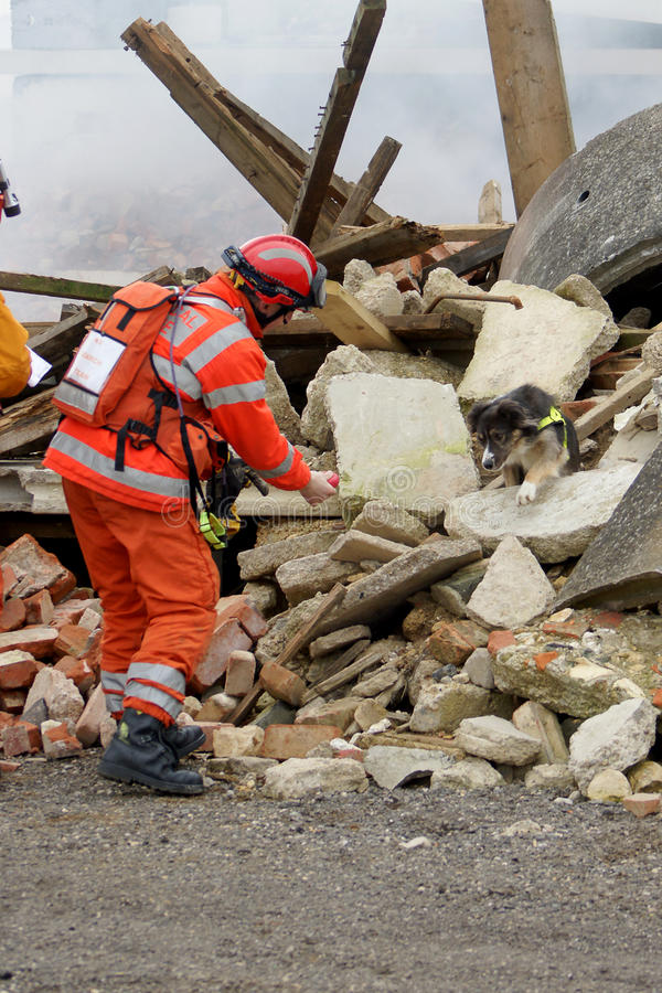 Rescue worker and dog at building stock photo