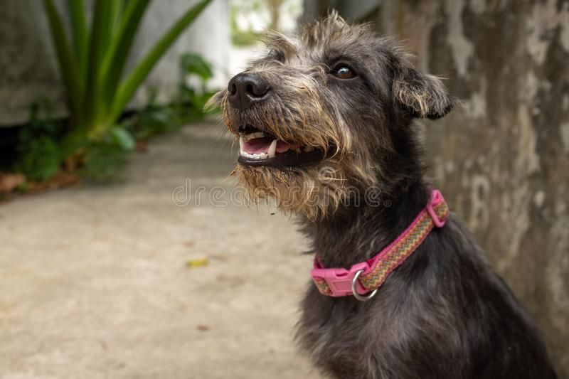 A rescued gray dog waiting at an animal shelter for new home stock images