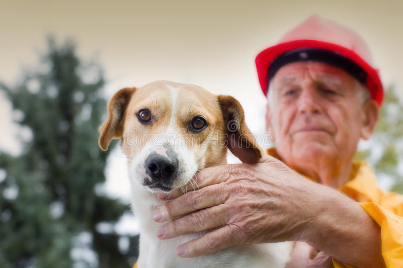 Rescuing dog stock image